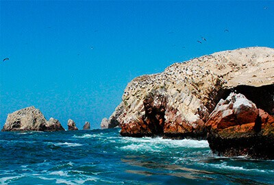 Ballestas Islands & Paracas National Reserve 1 Day